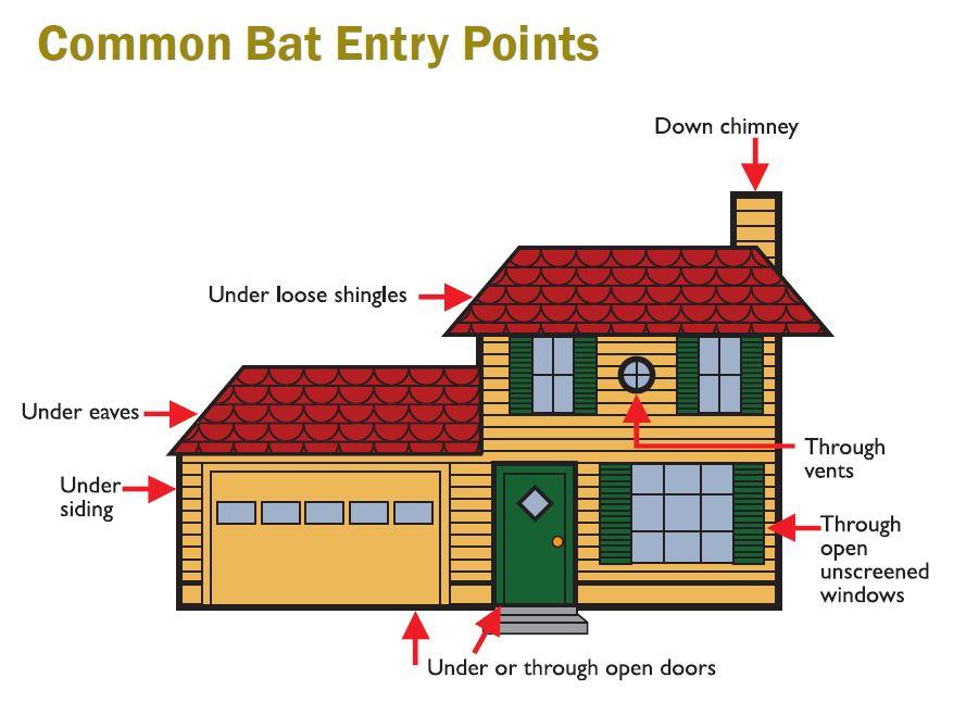 Common Bat Entry Points
